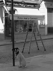 Dogs and Ladders. (danielodyssey (fujilover)) Tags: street bw dog dogs funny humour ladder stepladder
