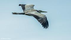 K3_39953_1_2048px (DJvL) Tags: amsterdame waterleiding duinen wildlife birds outdoor pentax k3 hddfa150450