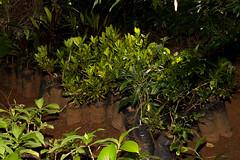 Viveiro-8 (Secom UnB) Tags: plantas jardim prc antonio jardins estufa prefeitura viveiro mudas antnio jardinagem campusdarcyribeiro