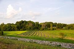 Crops at Callahan - Version 2 (Barbara L. Slavin) Tags: callahanstatepark farm framingham massachusetts usa