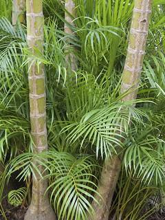 Nouméa, Parc forestier