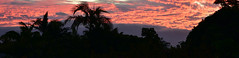 Lost in Summer (Images by Jeff - from the sea) Tags: nikon d7200 dusk twilight trees sky clouds sunset red redsunset orange orangesunset outdoor palmtrees tamron tamronsp2470mmf28divcusd 2470mm 2016 july topf25