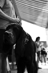 hotdog :) (Claudio Taras) Tags: claudio contrasto taras trier dog monochrom monocromo bw biancoenero bokeh black nikon 35mm18