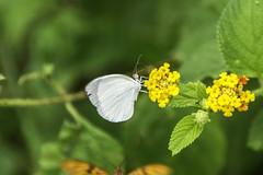 5119 (eacampos) Tags: guaiba cear brasil br alpha77 inseto animais macro natureza