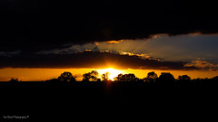 DSC_0153 (timmie_winch) Tags: nikon nikond3000 d3000 august august2016 2016 sun sunset sunsetsuffolk sunsetoversuffolkcountryside sunsetovercornfields sunsetovercornfield silhouette 18105mm 18105vr nikon18105mmvrlens shadows golden goldenhour goldenlight elliedunn ellie eleanordunn ells eleanor ellsdunn dunn landscape landscapephotography landscapephotographer naturephotographer naturephotography nature timwinchphotography tim timwinch winch debenham ip14 suffolk