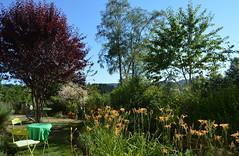 DSC_0988-1 (Chaumurky) Tags: h garden