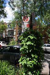 Petite-Patrie - Montral (-AX-) Tags: lapetitepatrie montral pancarte ruedestvallier