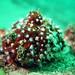 Bryozoan anemones