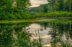 Morning-At-Wood-Creek-4 (desouto) Tags: nature hdr pond lake water plants trees wild flowers red green sky clouds shrubs