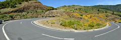 The very invasive Californian poppy. (Linda DV (away)) Tags: geotagged lumix spain panasonic tenerife canaryislands islascanarias 2015 geomapped lindadevolder