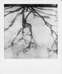 Nearly Nude (deep_blue_sea_1956) Tags: shadow tree monochrome blackwhite treeshadow simivalley impossible timezero polaroidsx70landcamera 149365