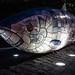 THE BIG FISH NEAR THE LAGAN WEIR IN BELFAST [BY JOHN KINDNESS] REF-104723