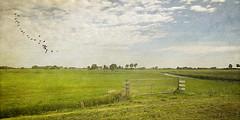 The fence (jacqaar) Tags: holland green fence meadow friesland weiland hek