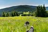 DSC_3746 (czargor) Tags: mountains landscape hill mountainside beskidy inthemountain dogtrekking beskidzywiecki