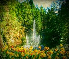 yellowspring on Vancouver Island (eepeirson) Tags: butchartgardens vancouverisland britishcolumbia canada spring alightexistsinspring emilydickinson txeeptopaz
