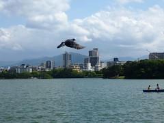 Jp16-Fukuoka-Lac-Parc Ohori (2) (jbeaulieu) Tags: japon fukuoka parc ohori lac