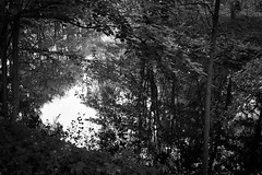 Reflections i. (hanneamunda) Tags: blackwhite pentax filmphotography film ilford ilfordhp5 oslo norway nature leaves trees reflection river water analog 35mm