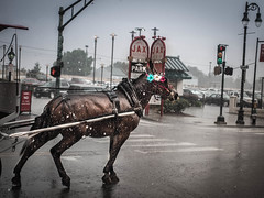Trudge (Billy Woolfolk) Tags: horse rain louisiana neworleans olympus tourist frenchquarter nola mule omd  em1 decaturst