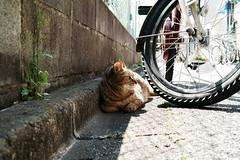 neko-neko1461 (kuro-gin) Tags: cat cats animal japan snap street straycat  sigma dp2