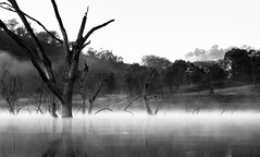 Drifting (Colin_Bates) Tags: trees mist lake west fog dead central nsw windamere