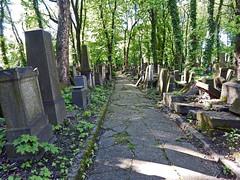 A Path through History (Antropoturista) Tags: poland krakau krakow necropolis cemetery graces path