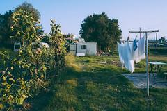 backyard (19seconds) Tags: backyard sunflowers grass sheets laundry crete chania garden 28mm ricohgxr28mmf25 ricoh