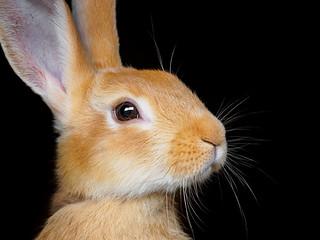 Bunny - Greifvogelpark Saarburg, Germany