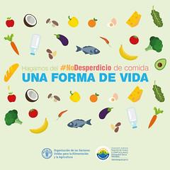 #NoDesperdicio (Corporacin Autnoma Regional del Guavio) Tags: nodesperdicio agua corpoguavio car asocar alimentos corporacinautnomaregionaldelguaviocorpoguavio colombia compost