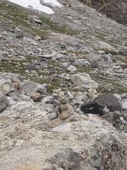 IMG_1353 (matdooley) Tags: middle teton grand tetons national park wyoming mountaineering scrambling bouldering