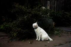 neko-neko1483 (kuro-gin) Tags: cat cats animal japan snap street straycat  sigma dp2