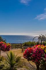 2016-08-14_09-50-46-5D3-0911-ew (mark@langstone) Tags: grounds hotel lawn seaview flowers guests people trees verandah woodland dawlish devon unitedkingdom gbr