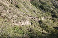 Going up....slowly (ShezBot2) Tags: honolulu oahu hawaii diamondhead