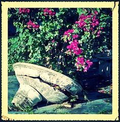 Trinitaria (SamyColor) Tags: film leaves hojas negative pelicula negativo yashica bugambilias yashicamg1 ultramax trinitaria yashinon45mmf28 ultramax400