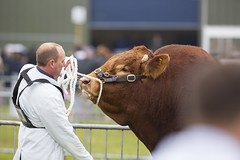 Kent_County_Show_2014_Highlights_004