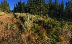 Trailhead (The VIKINGS are Coming!) Tags: california cabin hiking indian tahoe sage sierra alpine chalet paintbrush hutte hytte baita plumas vorwerk sierranevadamtns