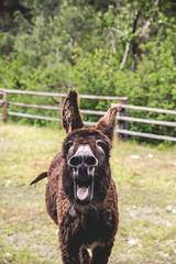 Arse (The Noisy Plume) Tags: ranch farm stock donkey salmonriver stud stallion sheppranch