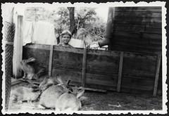 Archiv G354 Blick ber den Stallzaun, 1930er (Hans-Michael Tappen) Tags: outdoor tier kaninchen hasen tierfoto tierliebe tierfreunde hasenstall fotorahmen tierfreund archivhansmichaeltappen kanichenstall