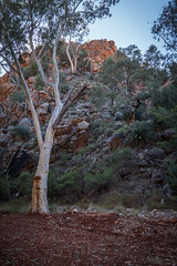 MacDonnell Ranges Stanley Chasm Northern Territory