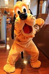 Pluto (sidonald) Tags: tokyo disney tokyodisneysea tds tokyodisneyresort tdr pluto   greeting horizonbayrestaurant