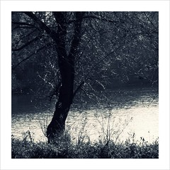 Mystery (Demmer S) Tags: trees waterside nature light tree outdoors lake river pond water outside treebranches branches arboreal botanical plant plants toned tint tinted tone tones toning square squareformat bw monochrome blackwhite blackandwhite bnw blackwhitephotos blackwhitephoto