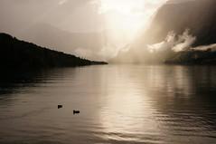 Slovenia (Yann OG) Tags: slovenia slovenija slovénie lac lake sunset goldenhour heuredorée coucherdesoleil canard duck light montagne mountain landscape paysage sigma30mm triglav rain pluie bohinj