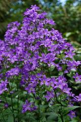 2016.07.014 Abbotsbury (6) (Kotatsu Neko 808) Tags: uk england gardens dorset subtropical abbotsbury abbotsburysubtropicalgardens