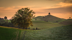 Waiting for the light (helena678) Tags: light sunset summer sky tree landscape schweiz switzerland evening nikon hills greenhills hirzel drumlins