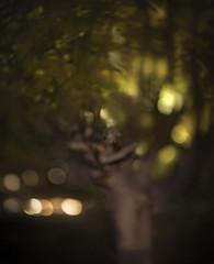 (PlainJK) Tags: anthropomorphic pollard tree mulberry night blur
