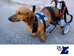Protesis y carritos para perros. CLINICA VETERINARIA DEL BOSQUE 2 (tipsparamascotas) Tags: veterinariadelbosqueveterinariacuidadodemascotasmascotassaludablesesteticacaninaclinicaveterinariadelbosqueespecialistasencuidadodemascotaswwwveterinariadelbosquecomveterinariadelbosque veterinaria cuidadodemascotas mascotas mascotassaludables estticacanina delbosque