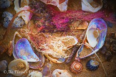 Shells & Coral (tia-louisethompson) Tags: shells beach sea ocean coral water nature natural bright colourful
