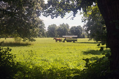 IMG_9317 On the way home (jaro-es) Tags: canon eos70d czechrep pferde caballos horses nature natura natur naturewatcher naturemaster naturesfinest grün green verde