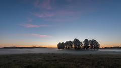 Sweeping mist (jarnasen) Tags: nikon d810 nikkor 1635mmf4 tripod hdr field golftrack trees mist dimma morning early fog sunrise dawn wideangle sky clouds multipleexposure nordiclandscape copyright jrnsen jarnasen sweden sverige stergtland vsterby landscape landskap nature outdoor mood atmosphere golfcourse explore explored