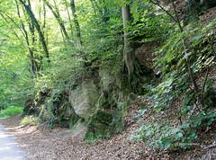 14-IMG_5013 (hemingwayfoto) Tags: felsen geologie herbst laub laubwald stein wald weg