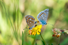 Conception (PA972) Tags: papillon french moselle pays de bitche nikon macrophotographie nature 150mm sigma macro 57230 pa972 athanase macrodream dream dreams